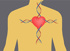 Genetic Study Finds New Gene and Pathway that Prevent Heart Attacks